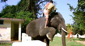Elephant Trainer Photo