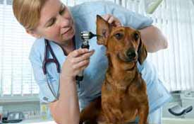 A Scientific Background is Common in the Animal Industry Photo Button